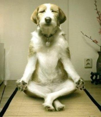 Meditare fa bene proprio a tutti!